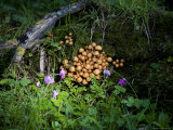 Mushrooms and Bluebells on a Mossy Forest Floor  Qilian Mountains  China