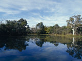 River Red Gum Eucalypt Tree Reflecting into a Wetland Pool  Australia