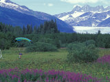 Paraglider Landing in a Field near the Mendenhall Glacier  Alaska