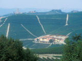 Popular Wine Region in the Piemonte  Italy