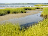 Salt Marsh Habitat with Flock of Birds Taking Off  Cape Cod  Massachusetts