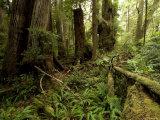 Lush Floor of a Rainforest  Washington