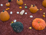 Pumpkin and Squash Display at Husker Harvest Days