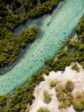 Mangrove and a Clear Estuarine River Close to the Indian Ocean  Mozambique
