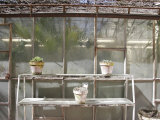 Potted Plants on Outdoor Shelves Outside a Flower Nursery  Parma  Italy