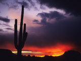 Storm Clouds Pass over a Saguaro Catus near Phoenix  Arizona