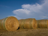 Straw Bales on a Hog Farm in Kansas