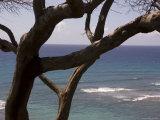 Overlooking the Pacific Ocean in Hawaii