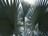 Singapore: Palm Trees in a Public Park