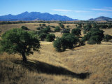 Trees Below the Santa Rita Mountains in Southern Arizona