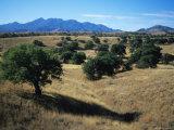 Trees Below the Santa Rita Mountains in Southern Arizona