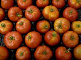 Native Tomatoes at an Outdoor Market in New York City