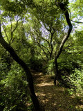 Tree Lined Nature Path Leading to the Water on a Summer Afternoon