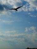 Seagull Soars over Long Island Sound and Plum Island Light