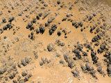 Sandstone Peeking Through the Orange Sand on the Djado Plateau  Niger