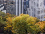 Skyscrapers Rise Way above the Trees in Central Park