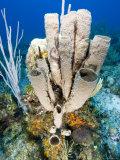 Tube or Stove Pipe Sponge