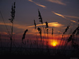 Sea Oats Blow in the Breeze as the Sun Sets over the Gulf of Mexico  Holmes Beach  Florida