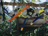 Snorkeling Equipment Hanging from Tree Branch