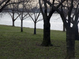 Trees Line the Potomac River in Washington  DC