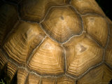 Tortoise Shell at the Lincoln Children&#39;s Zoo  Nebraska