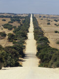 Tree Lined Straight Dirt Road Running Through Farmland  Coorong National Park  Australia