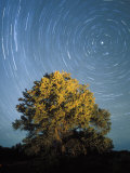 Startrails Around the Polaris and Pinyon Pine Tree  Utah