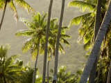 Scenic View of Backlit Coconut Palm Trees  Anaho Bay  French Polynesia