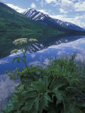Summit Lake  Cow Parsnip  Lake and Mountains  Alaska