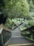Stairwell and Aerial Walkway Overlooking Cool Temperate Rainforest  Australia
