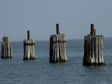 Wooden Pilings at a Ferry Dock