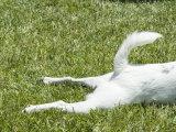 Tail and Part of Dog Laying on Grass  Santa Barbara  California