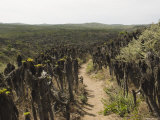 Trail on San Miguel Island Leading to Ranger Station  California