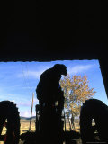 Silhouette of a Man on his Tractor Coming Through Barn Doors