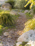 Stone Path Through Garden  Santa Barbara  California