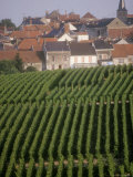 Vineyards in the Champagne Region  France
