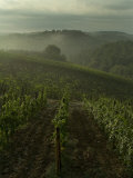 Vineyards Along the Chianti Hillside Through the Fog  Tuscany  Italy