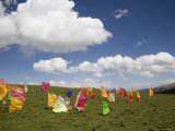 Tibetan Prayer Flags in a Field  Qinghai  China