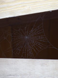 Spider Web in Wood Beams  California