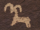 Wolfe Ranch Ute Petroglyph Panel of Bighorn Sheep  Utah