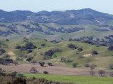 Scenic Landscape of Oak Woodland Habitat  California