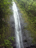 The Manoa Falls Waterfall in Honolulu  Hawaii
