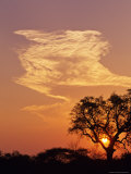 Sunset Through a Silhoetted Acacia Tree  South Africa
