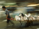 Worker Quickly Wheels a Handcart Loaded with Slabs of Tuna  Tsukiji Fish Market  Japan