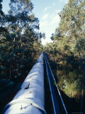 Water Pipe for Irrigation  Yellingbo Nature Reserve  Australia