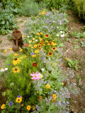 Colourful Summer Flowers in Garden