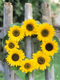 A Wreath of Sunflowers Hanging on a Fence