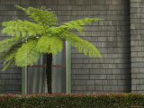 Window of Building with a Green Fern Tree in Front  Santa Barbara  California
