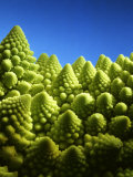 Close up of Romanesco