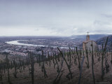 Vineyard Overlooks the City and the Rhone River  France